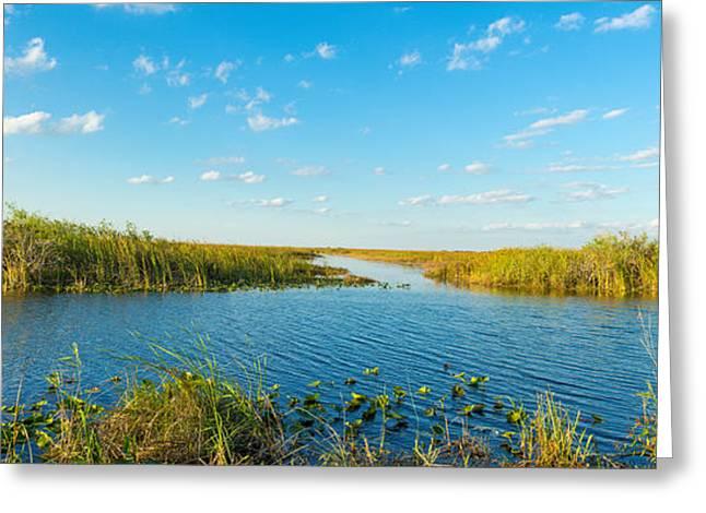Swamp People Greeting Cards - Reed At Riverside, Big Cypress Swamp Greeting Card by Panoramic Images