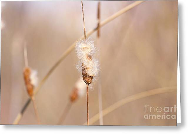 Reed Bed Greeting Cards - Reed beds at wetland Greeting Card by Gunter Wolters