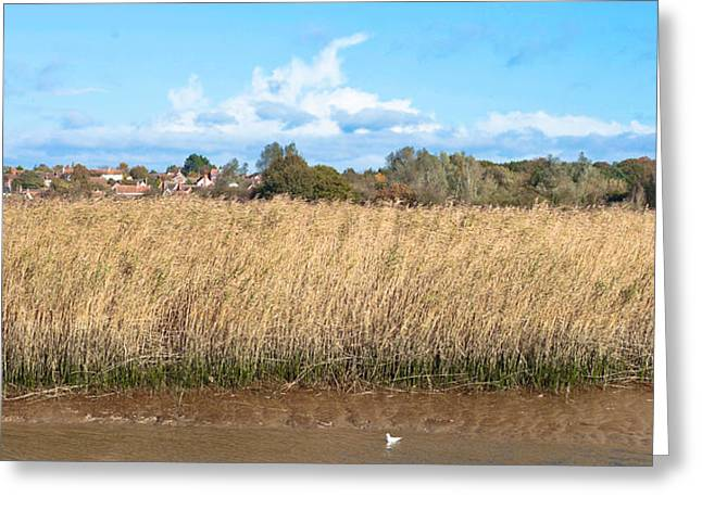 Bulrushes Greeting Cards - Reed marsh Greeting Card by Tom Gowanlock
