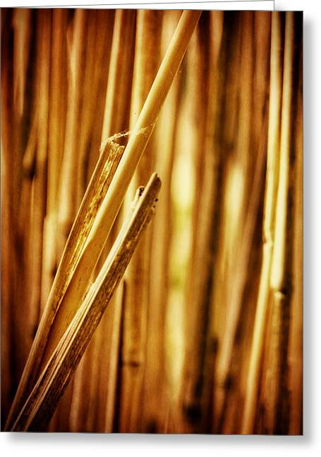 Natural Patterns Greeting Cards - Reed Greeting Card by Wim Lanclus