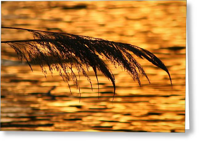 Against The Sunlight Greeting Cards - Reeds Across The Water Greeting Card by Ron Grafe