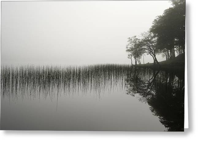 Argyll And Bute Greeting Cards - Reeds and shore in the mist Greeting Card by Gary Eason