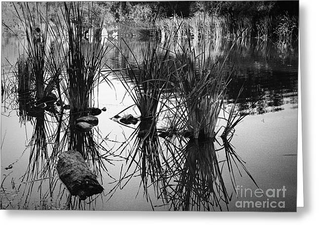 Prescott Greeting Cards - Reeds Greeting Card by Arne Hansen