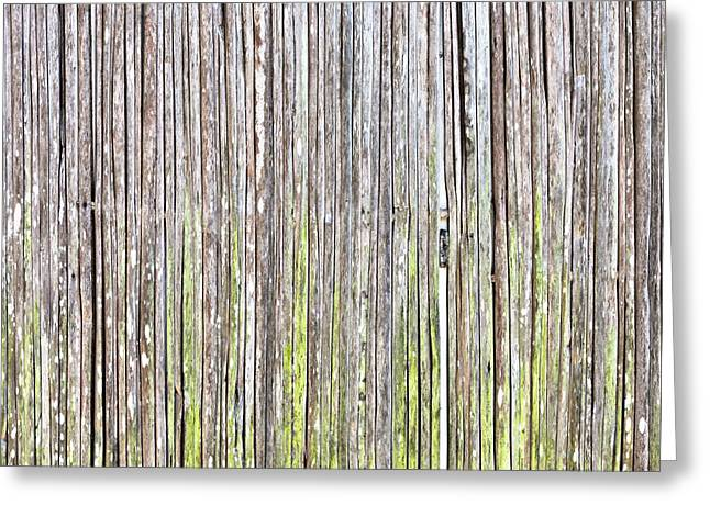 Plank Greeting Cards - Reeds background Greeting Card by Tom Gowanlock