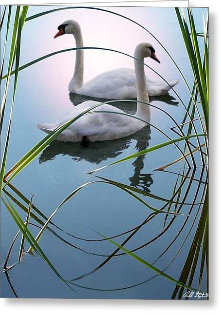Swans... Digital Art Greeting Cards - Reeds Greeting Card by Bill Stephens