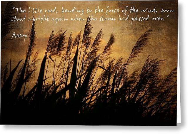 Against The Sunlight Greeting Cards - Reeds Blowing in the Wind Greeting Card by Ron Grafe