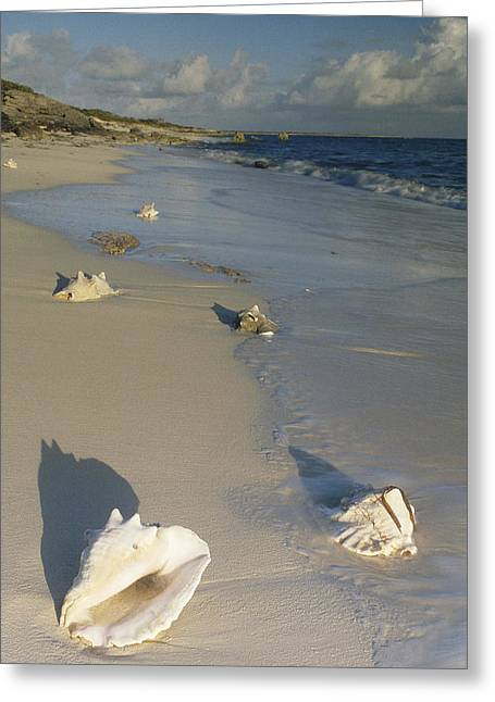 Turks And Caicos Islands Greeting Cards - Reef Harbor Beach Turks And Caicos Greeting Card by Gerry Ellis