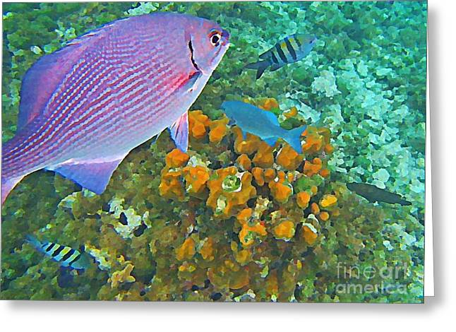 Johnmaloneartist.com Greeting Cards - Reef Life Greeting Card by John Malone