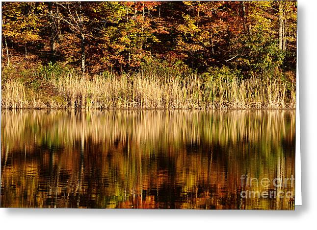 Refections In Water Greeting Card by Dan Friend