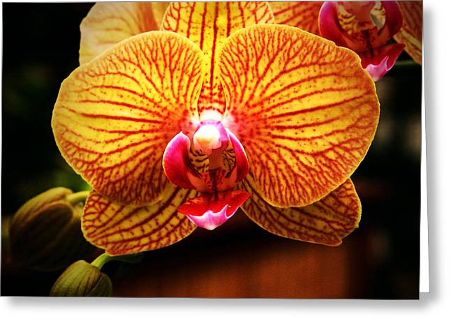 Colorful Orchid Greeting Cards - Reflected Greeting Card by John A Royston