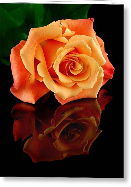 Petal Greeting Cards - Reflected Rose Greeting Card by Jim Hughes