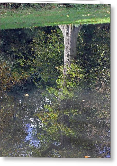 Trees Reflecting In Water Greeting Cards - Reflected Tree Greeting Card by Tony Murtagh