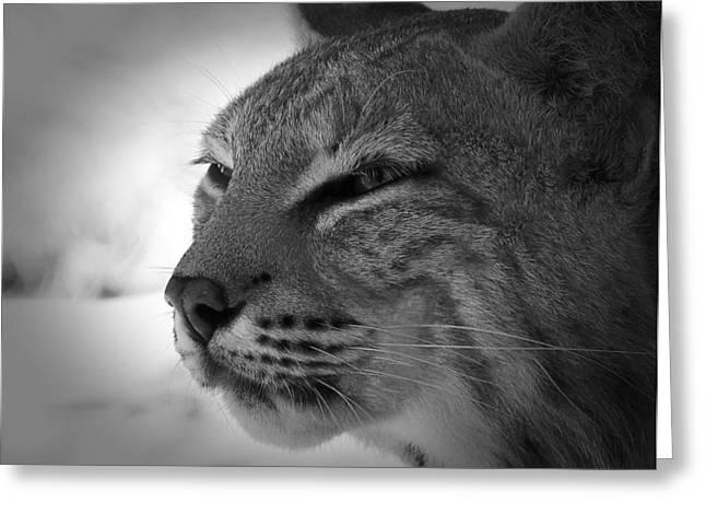 Reflecting Bobcat... Greeting Card by Christena  Stephens