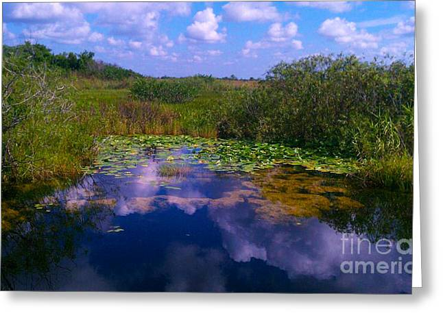 Reflecting In The Glades Greeting Card by Charlie Cliques