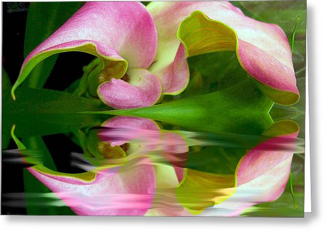 Reflecting Lily Greeting Card by Michele  Avanti