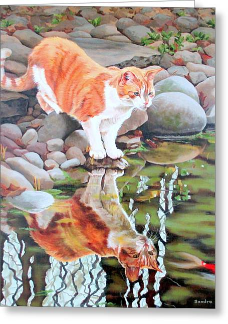 Sandra Chase Greeting Cards - Reflecting Greeting Card by Sandra Chase