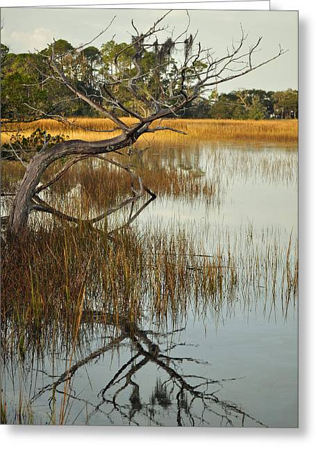 Beach Photograph Greeting Cards - Reflecting Tree in Jekyll Island Marsh 1.2 Greeting Card by Bruce Gourley