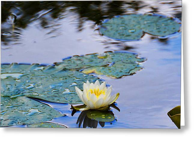 Lilly Pads Greeting Cards - Reflecting White Lilly Greeting Card by Christine  Dekkers