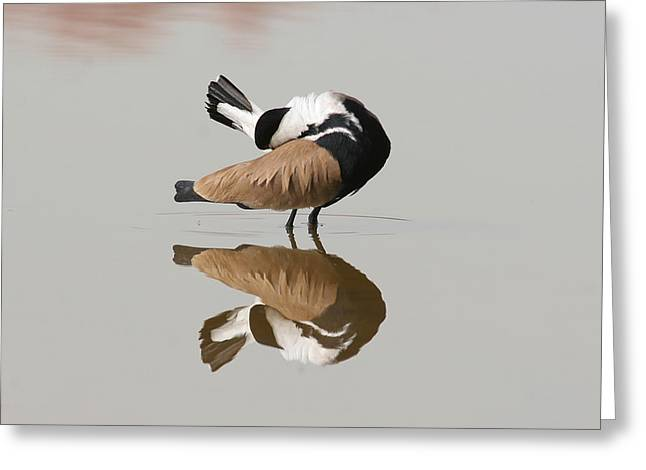 """""""nature Image"""" Pyrography Greeting Cards - Reflection Greeting Card by Alon Meir"""