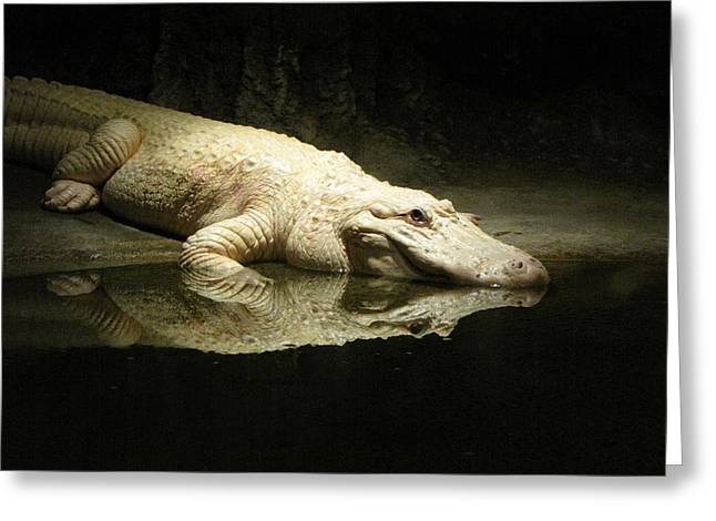 Audubon Zoo Greeting Cards - Reflection Greeting Card by Beth Vincent