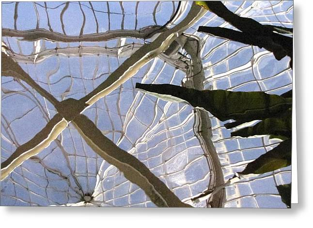 Phipps Conservatory Greeting Cards - Reflection in a Pond Greeting Card by Rebecca Mebane