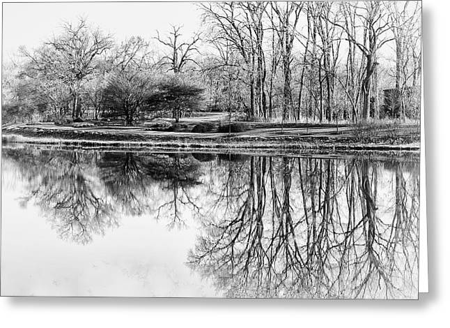 Bare Trees Greeting Cards - Reflection in Black and White Greeting Card by Julie Palencia