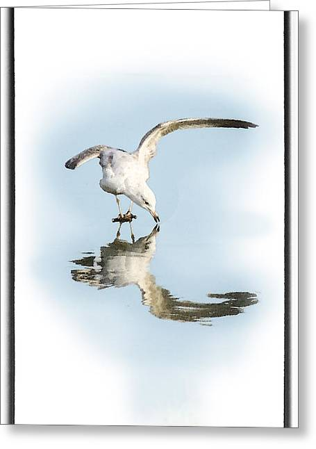 Larus Delawarensis Greeting Cards - Reflection in Ice Greeting Card by Betty LaRue