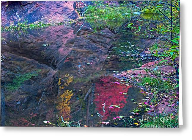 West Fork Greeting Cards - Reflection in the Creek Greeting Card by Brian Lambert