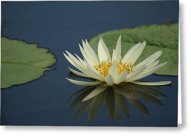 Reflection.etc Greeting Cards - Reflection in time. Greeting Card by Rob Luzier