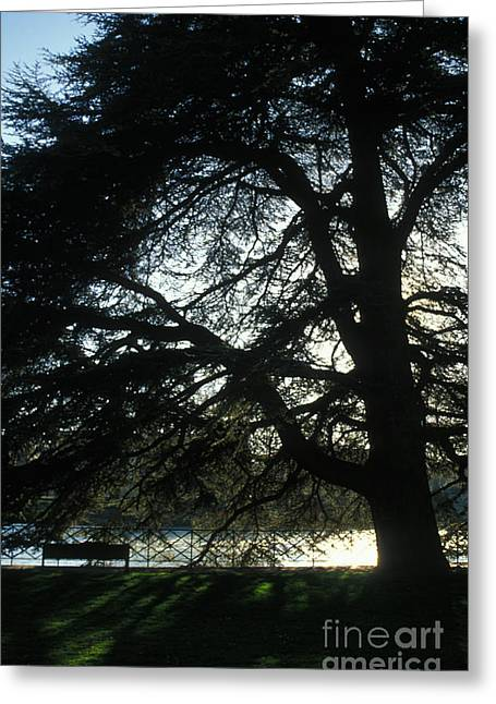 Besancon Greeting Cards - Reflection Light and Shadow Greeting Card by Gregory Schultz