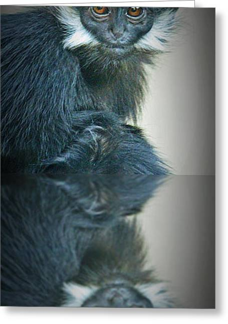 Francois Digital Art Greeting Cards - Reflection of a Francois Langur Monkey  Greeting Card by Jim Fitzpatrick