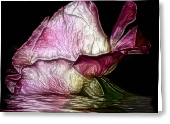 Reflecting Water Digital Art Greeting Cards - Reflection of a Rose Greeting Card by Camille Lopez