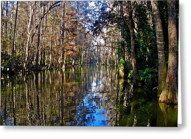 Trees Reflecting In Water Greeting Cards - Reflection of Beauty Greeting Card by Denise Mazzocco