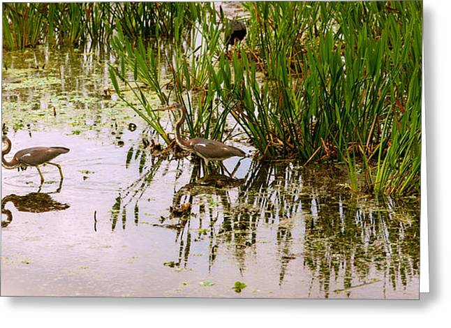 Cranes In Florida Greeting Cards - Reflection Of Cranes On Water, Boynton Greeting Card by Panoramic Images