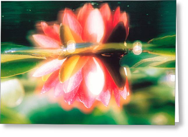 Selective Soft Focus Greeting Cards - Reflection Of Flower In Pond, Lotus Greeting Card by Panoramic Images
