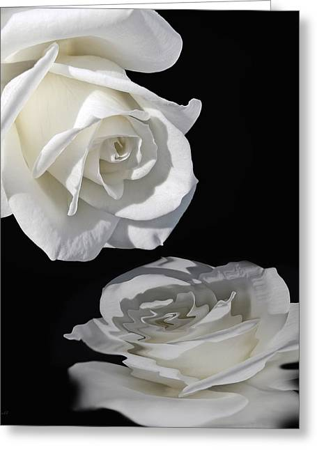 Ivory Roses Greeting Cards - Reflection of my Love White Rose Greeting Card by Jennie Marie Schell