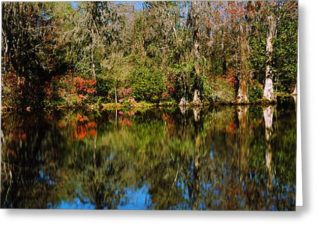 Moss Greeting Cards - Reflection Of Spanish Moss Covered Greeting Card by Panoramic Images