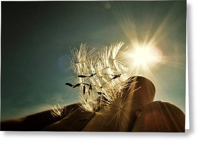 Reflection Of The Sun Greeting Card by Marianna Mills