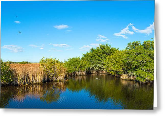 Swamp People Greeting Cards - Reflection Of Trees In A Lake, Big Greeting Card by Panoramic Images