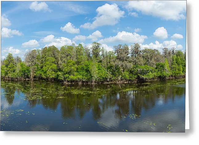 Lettuce Greeting Cards - Reflection Of Trees In The River Greeting Card by Panoramic Images