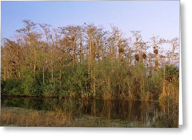 Reflections In River Greeting Cards - Reflection Of Trees In Water, Turner Greeting Card by Panoramic Images