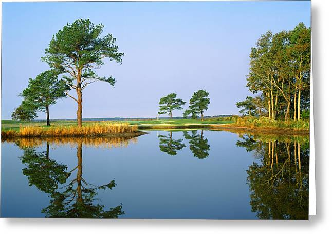 Worcester Greeting Cards - Reflection Of Trees On Water, Ocean Greeting Card by Panoramic Images