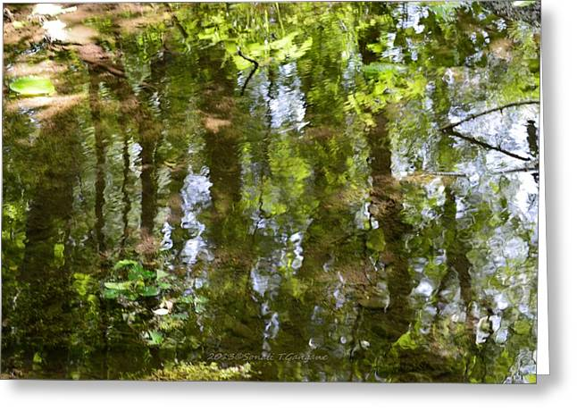 Reflection Of Trees In Stream Greeting Cards - Reflection of woods Greeting Card by Sonali Gangane