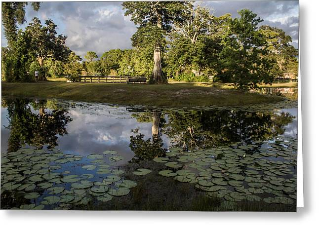 Lilly Pad Greeting Cards - Reflections 3 Greeting Card by Tom Goldsmith