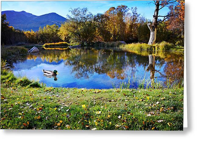 Beautiful Creek Greeting Cards - Reflections at the Duck Pond Greeting Card by Lynn Bauer