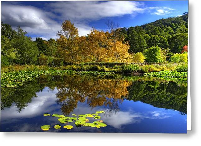 Lilly Pads Greeting Cards - Reflections Greeting Card by Damian Morphou