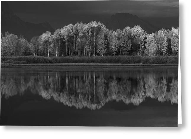 Grey Scale Greeting Cards - Reflections Greeting Card by David Andersen