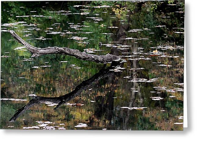 Pond In Park Greeting Cards - Reflections Greeting Card by Elizabeth Winter