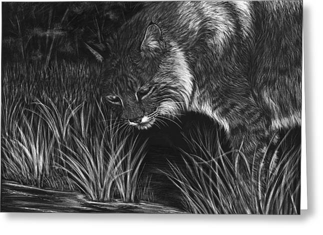 Bobcat Drawings Drawings Greeting Cards - Reflections Greeting Card by Heather Ward