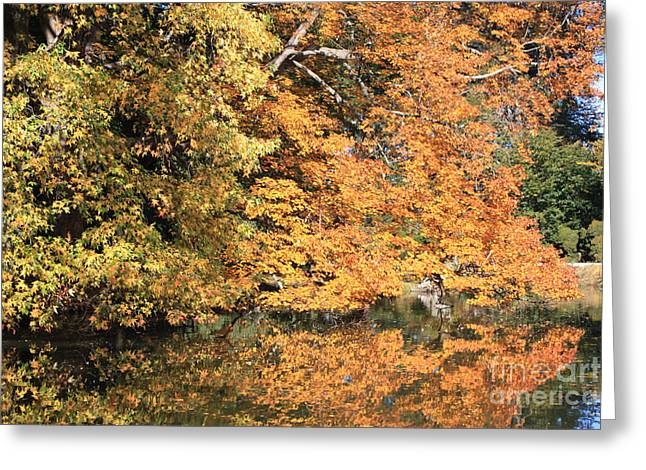 Green And Yellow Greeting Cards - Reflections II Greeting Card by John Telfer